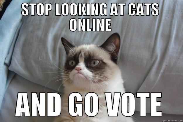 cat-vote