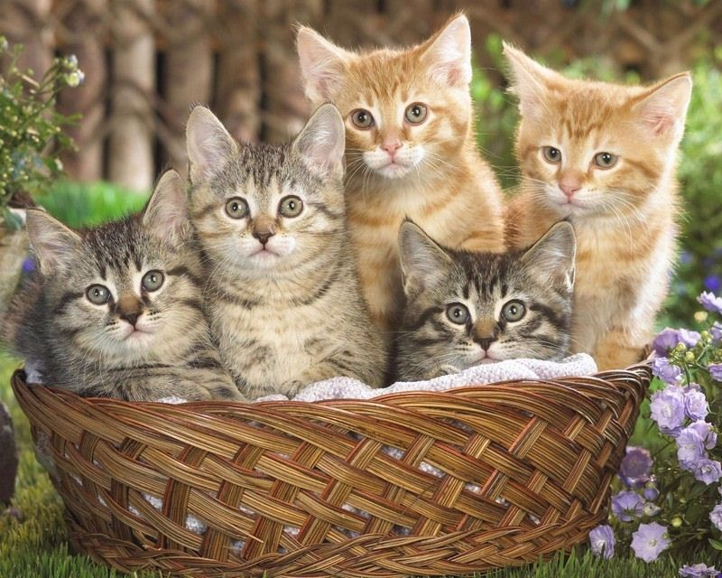 kittens_basket